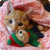 Adopt A Pet :: Carmello - Kitty Love Bug'13 - New York, NY