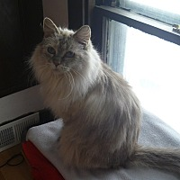 Adopt A Pet :: Grizabella - MADISON, OH