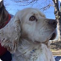 Adopt A Pet :: Reagan - Alpharetta, GA