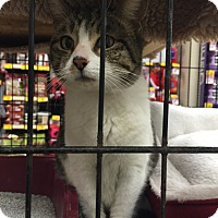 Adopt A Pet :: Katness - Monroe, GA