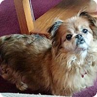 Adopt A Pet :: MIMI - Inver Grove, MN