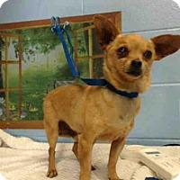 Adopt A Pet :: A493611 - San Bernardino, CA