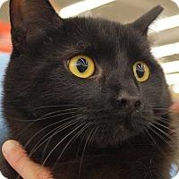 Adopt A Pet :: Robin - Elyria, OH