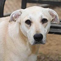 Adopt A Pet :: Oreck - Rossville, TN