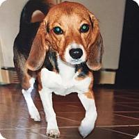 Adopt A Pet :: EMMA- Courtesy Posting - Ventnor City, NJ