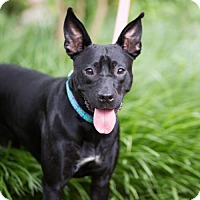 Adopt A Pet :: Halia - Glastonbury, CT