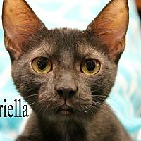 Adopt A Pet :: Gabriella - Wichita Falls, TX