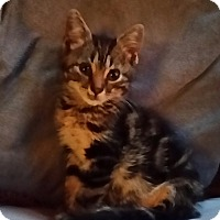 Adopt A Pet :: Spencer 'Reed' - Palatine, IL