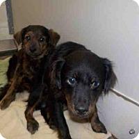 Adopt A Pet :: A046356 - Temple, TX