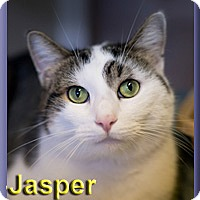 Adopt A Pet :: Jasper - Aldie, VA
