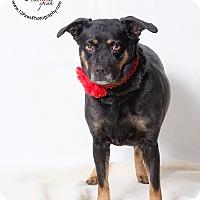 Adopt A Pet :: Roxy - Apache Junction, AZ