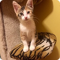 Adopt A Pet :: Mary - Hoffman Estates, IL