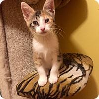 Adopt A Pet :: Mary - Hoffman Estates, IL