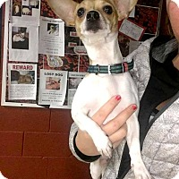 Adopt A Pet :: Remmy - Marion, IN