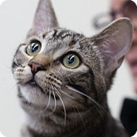 Adopt A Pet :: YZMA - Pt. Richmond, CA