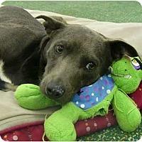 Adopt A Pet :: Cybill - Mocksville, NC