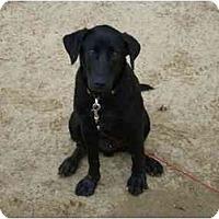 Adopt A Pet :: Lou - Albany, NY