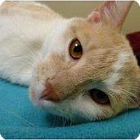 Adopt A Pet :: Carob - Chicago, IL