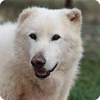 Adopt A Pet :: Nook - Austin, TX