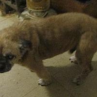 Adopt A Pet :: Kojak - Oakdale, TN