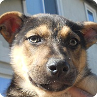 Adopt A Pet :: Baby Zeb - Oakley, CA