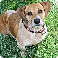 Adopt A Pet :: Sadie - Yorba Linda, CA