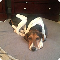 Adopt A Pet :: Gracie - Huntsville, AL