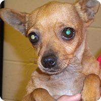 Adopt A Pet :: Mercedes - Fresno, CA