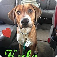 Adopt A Pet :: Kyle - Manhasset, NY
