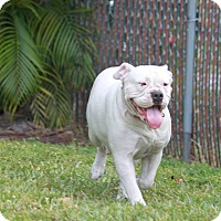 Adopt A Pet :: Misty - Pompano Beach, FL