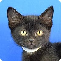 Adopt A Pet :: Gayle - Carencro, LA