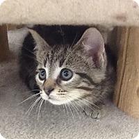 Adopt A Pet :: Cash - Warren, OH