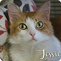 Domestic Longhair Cat for adoption in Benton, Louisiana - Jessicat