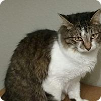 Adopt A Pet :: Bert - Garland, TX
