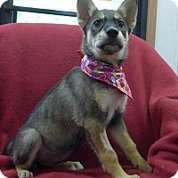Adopt A Pet :: Mikita - Manning, SC