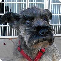 Adopt A Pet :: Bo - Oskaloosa, IA