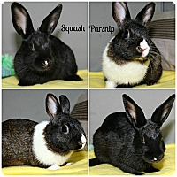Dutch Mix for adoption in Forked River, New Jersey - Squash & Parsnip