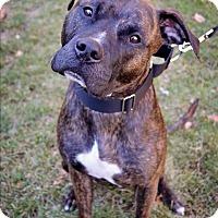 Adopt A Pet :: Austin - Mansfield, MA