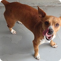 Adopt A Pet :: Sangria - Seguin, TX