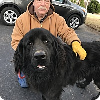 Adopt A Pet :: Gus - Glastonbury, CT