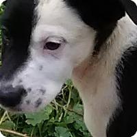 Adopt A Pet :: Scott - Brooklyn Center, MN