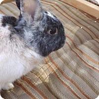 Adopt A Pet :: Chas - Palm Coast, FL