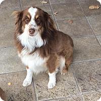 Adopt A Pet :: Marcus - Albuquerque, NM