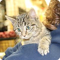 Adopt A Pet :: Rainbow - Rochester, MN