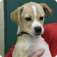 Adopt A Pet :: Aubrey - Elyria, OH