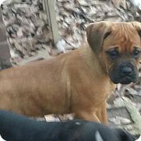 Adopt A Pet :: Sherlock - Wilminton, DE