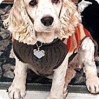 Adopt A Pet :: Grace - Menomonee Falls, WI