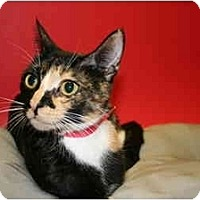 Adopt A Pet :: BETSY - SILVER SPRING, MD