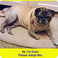 Adopt A Pet :: Duke - Eagle, ID