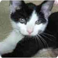 Adopt A Pet :: Inky - Arlington, VA